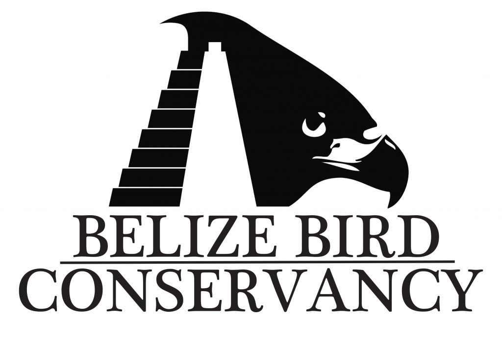 We conserve birds in their habitats across Belize through on-the-ground scientific research, education, advocacy, and collaborations. The Belize Bird Conservancy is a 501(c)(3) non-profit, tax-exempt charitable organization