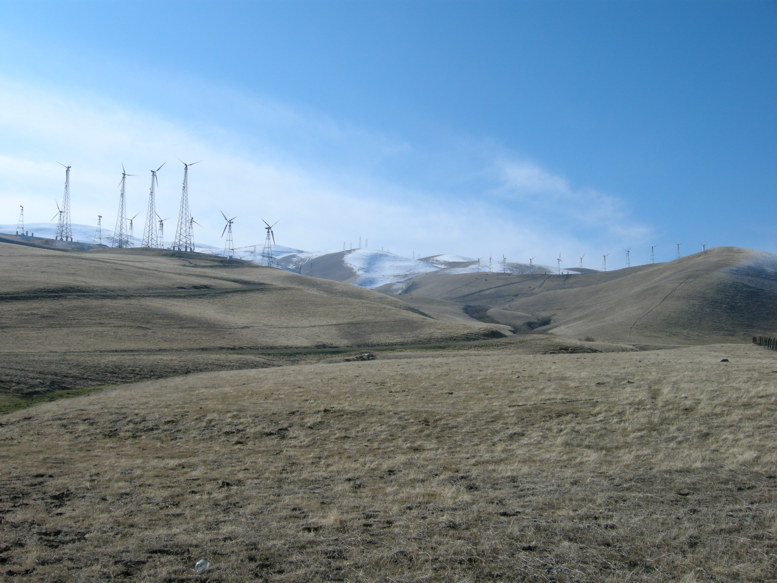Livermore Hills area of the World Larest Eagle Population