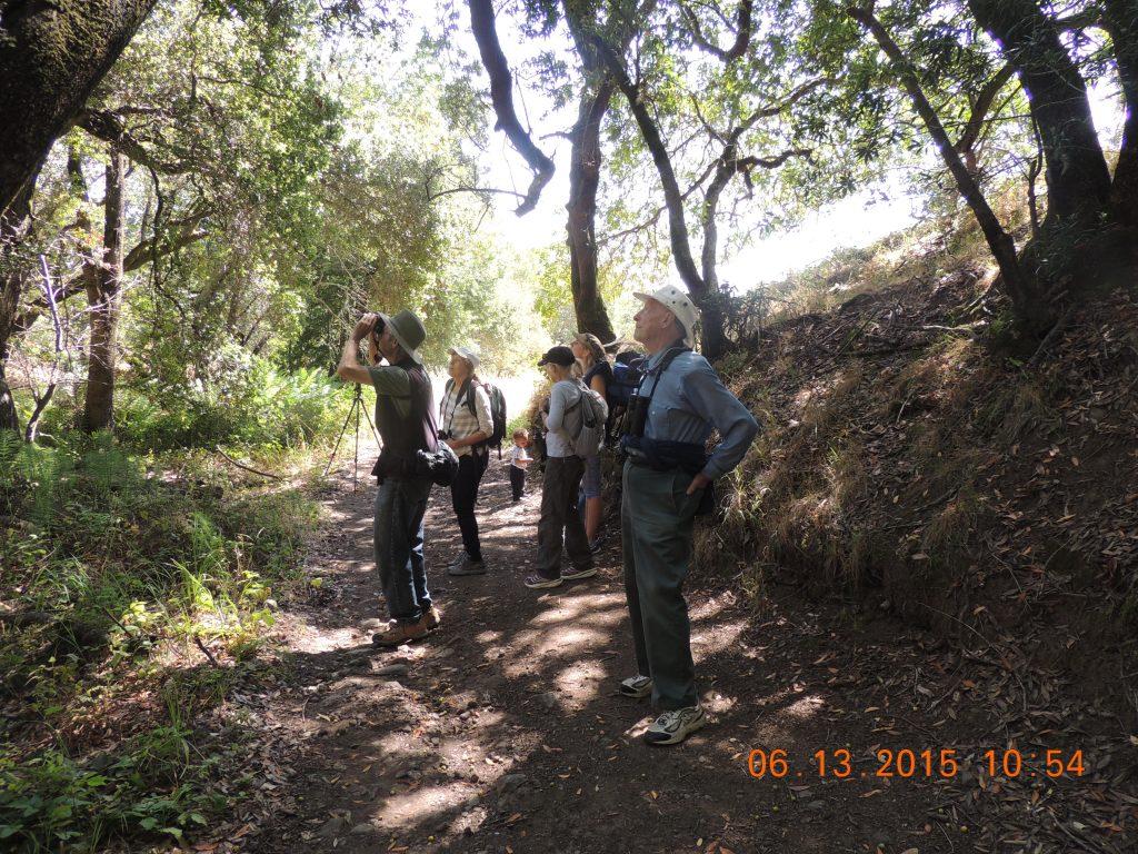 Bird Walk for Marin Audubon Society, seeking spring migrants.