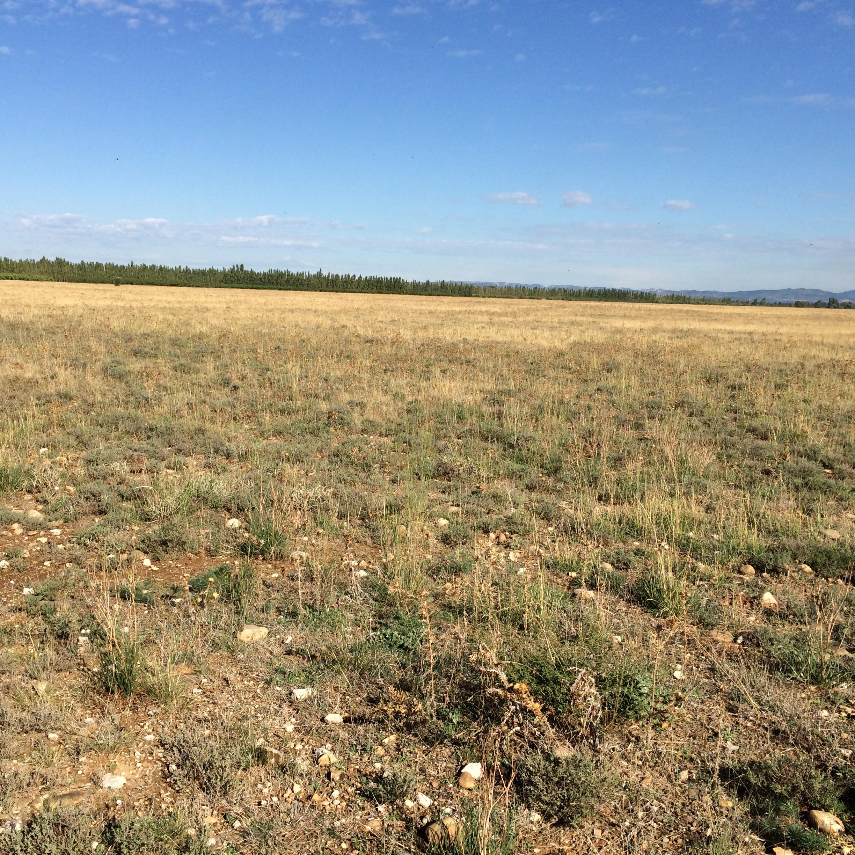 Orginal French Coastal Stepee Plains