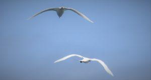 Pelagic Birds from shore: Boobies, Frigatebird, Tropicbird, Petrel and Shearwaters.