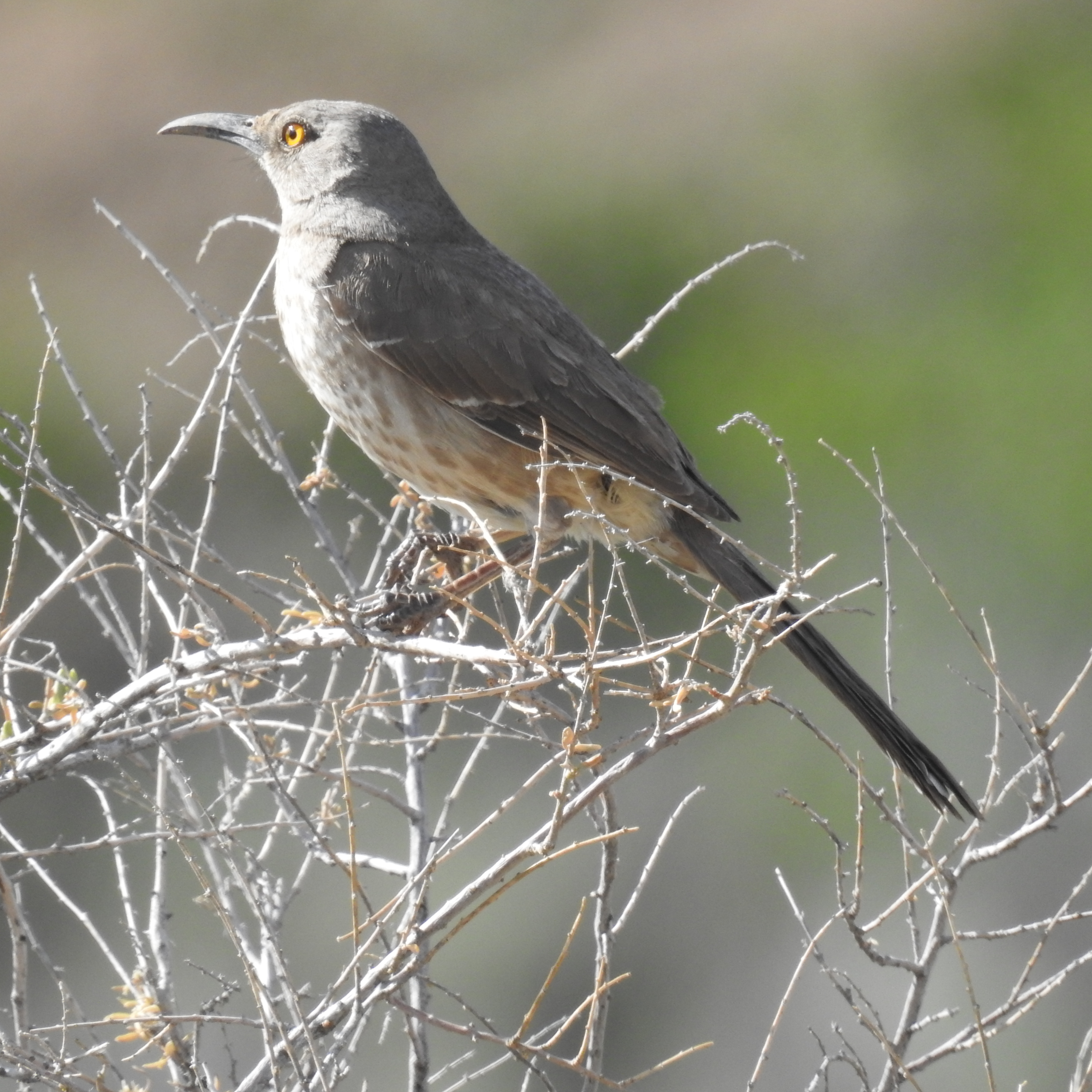 Best Camera For Birding 2020 5/22/2020 New Mexico Southern Rocky Mtn. and High Plains, Birding