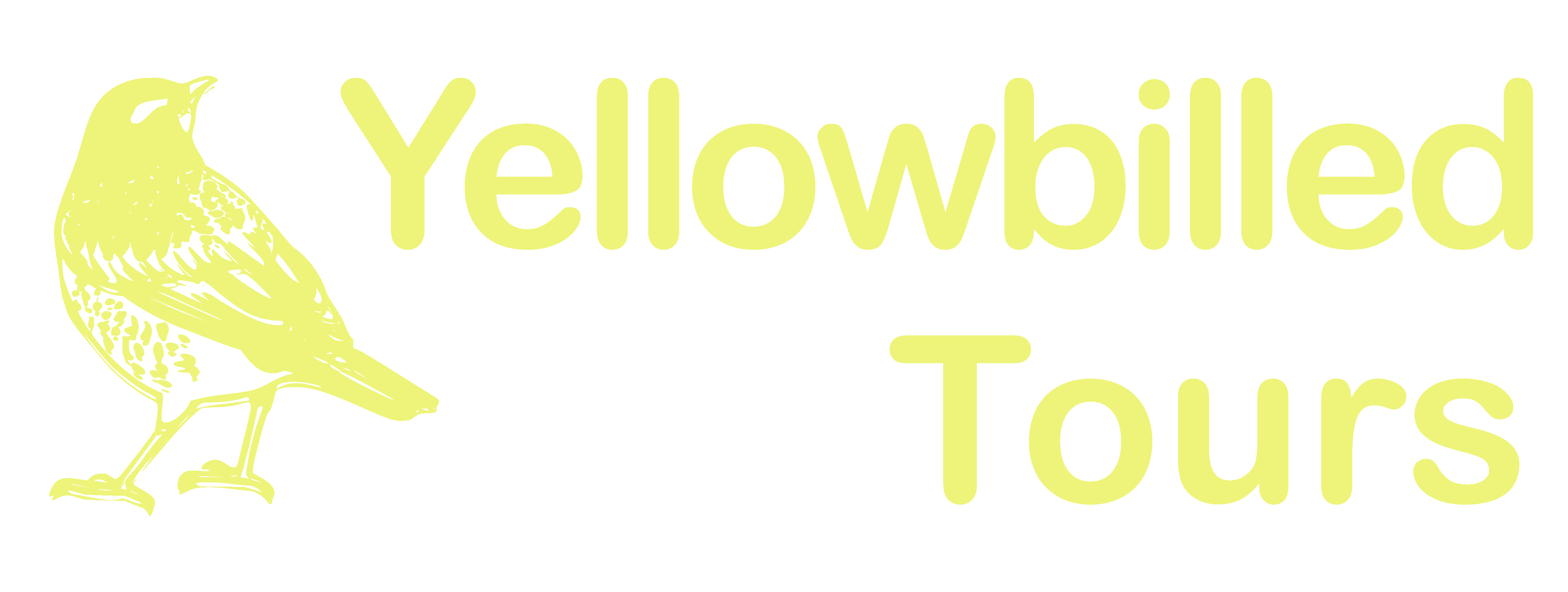 Yellowbilled Tours