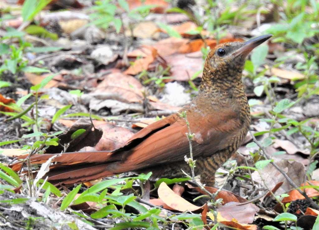 Tropical birding trip
